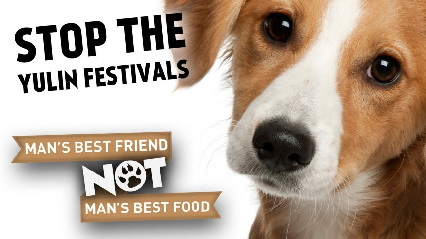 Chinese Dog Eating Festival - Delight or Plight