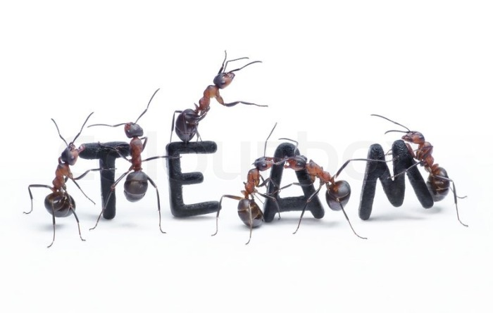 Learning Teamwork from Ants